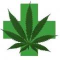 http://www.yourcannabishealing.com