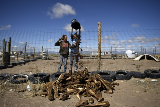 Charina Cook, left, and her cousin Kebrina Orth, dump out the huge butcher scrap bones left after the wolves ate their fill on April 2, 2017 near Hooper, Colorado.